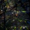 光る笹の葉に導かれ・・