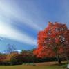 秋の一日 -T