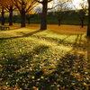 秋の日は釣瓶落とし