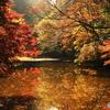 晩秋の里池