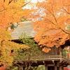 秋色に囲まれて