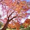 秋の万華鏡