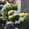 慰霊碑の菊