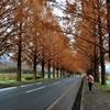 果てない冬紅葉並木道