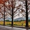 紅葉の冬日