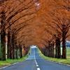 冬紅葉トンネル