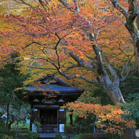紅葉の黄梅院