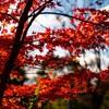 本日の秋色