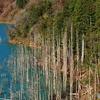 秋のダム湖