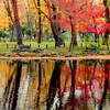 塚山公園の紅葉