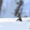粉雪エゾリス
