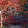 室生寺 金堂の秋