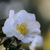 花便り - 銀月 -