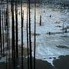 薄陽の氷湖Ⅱ
