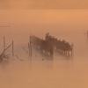 印旛沼・朝景 - 茜霧の水鳥たち -