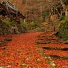 落ち葉の参道②
