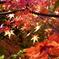 大手企業の日本庭園の紅葉