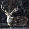 鹿さん 東山動物園