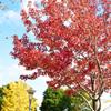 三色の木々