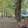 いちょう並木とベンチ