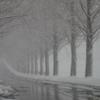 雪景メタセコイア並木