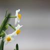 花便り - 楽しみな花盛り -