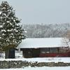 雪中の赤2