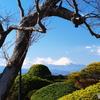 春待ち桜と富士