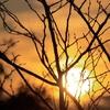 木々の目覚め