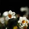 駆込み寺の冬花…1