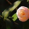 早春の陽を浴びて