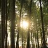 竹林の間から眩しい太陽