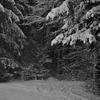 雪道散歩1