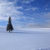 真冬のツリー