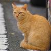 吾輩は猫である、ニャー # 382