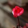 光と影そして花