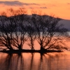 湖北の水中木