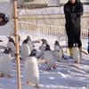 ペンギンの雪中さんぽ 1周目