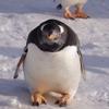 ペンギンの雪中さんぽ ゴール後