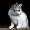 frame cat