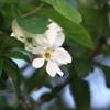 白い花が咲いてた~散歩道