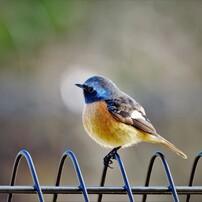 いろいろな鳥たち