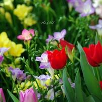 春色の花々
