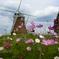 秋桜と風車