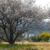 写真句:春爛漫、故郷の山が見える