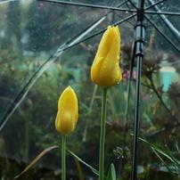 雨も楽しいかもね。