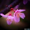 PETAL -Spring-