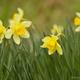 春の風と戯れる