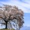 桜の樹の下で#2