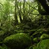 屋久島 「もののけの森」(通称)